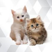 Kedi (4)