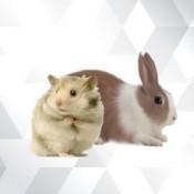 Hamster & Tavşan (4)