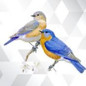 Kuş (24)